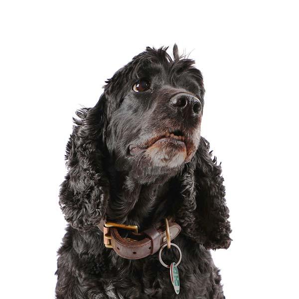 versicherung-paderborn-berufsunfähigkeitsversicherung-ovb-daniel-uhlmannsiek-finanzberater-vermögensberater-hund-versicherung-paderborn-Buerohund Barney